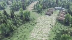 Profunda na floresta