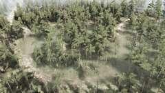 Swampy floresta